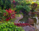 Kauai Nursery and Landscaping