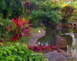 Kauai Nursery and Landscaping